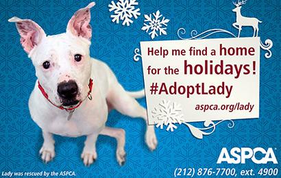 AdoptLady-410x260